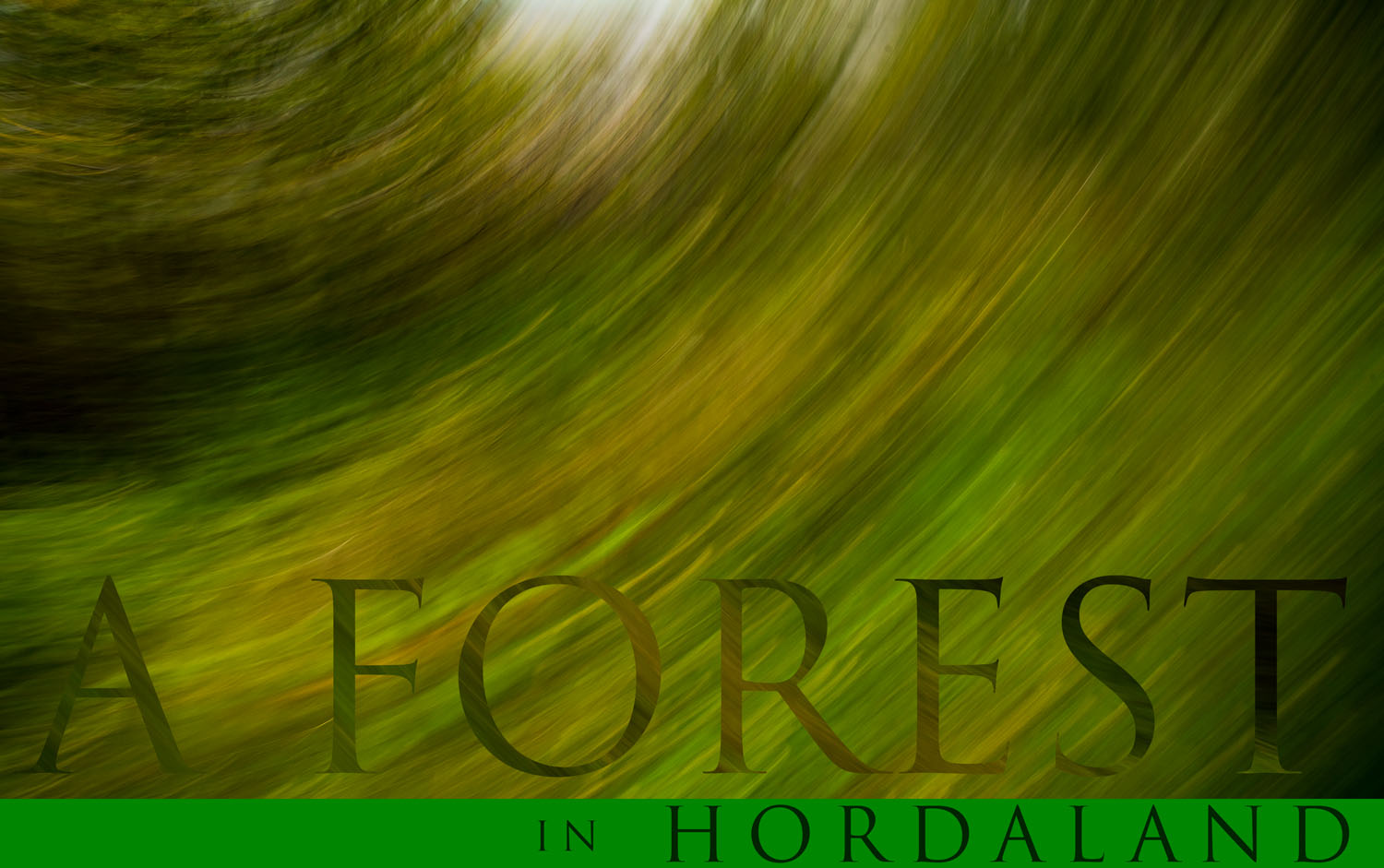 A-forest-in-Hordaland-Norway (16)