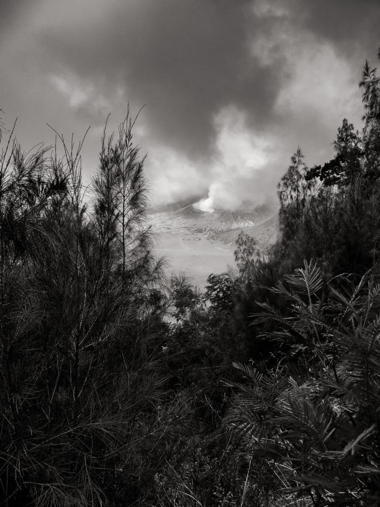 Bromo-through-the-brush-Mount-Bromo-Tengger-Semeru-National-Park-Java-Indonesia